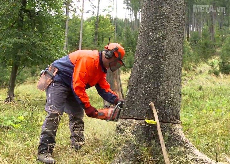 Máy cưa xích giúp cắt những thân cây lớn nhanh chóng
