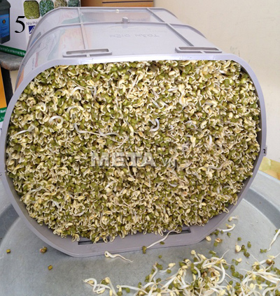 Máy làm giá đỗ GV-102 công nghiệp trồng được 10kg giá đỗ