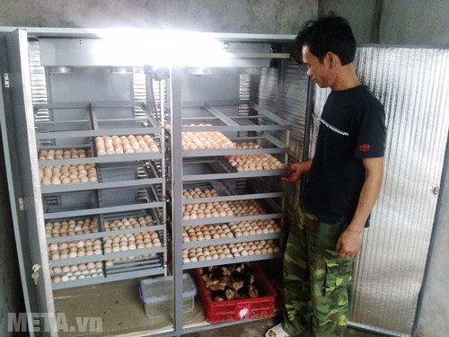 Máy ấp trứng Mactech MT3000PS có khả năng ấp 3000 trứng gà ta, 3700 trứng chim trĩ, 4000 trứng chim cút... mỗi lần